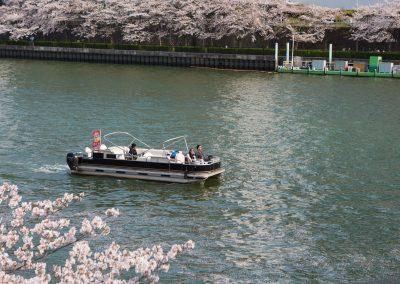 Osaka Wonder Cruise sakura